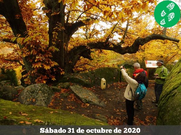 201031 - Bosques de La Herrería